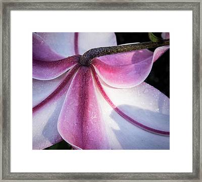 Lilies Backside Framed Print by Jean Noren