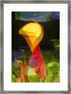 Lilies Framed Print by Eileen Shahbazian