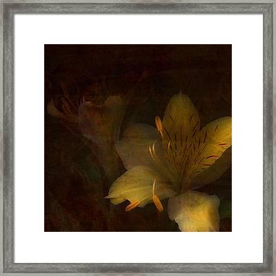 Lilies II Framed Print by Bonnie Bruno