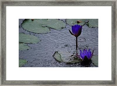 Framed Print featuring the photograph Lilies In The Rain by Amee Cave