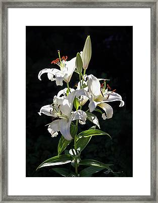 Lilies In The Sun Framed Print