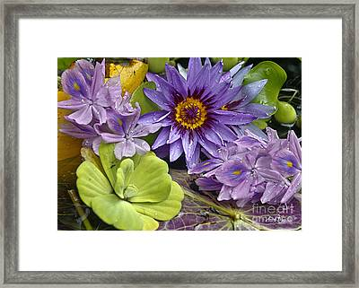 Lilies No. 38 Framed Print by Anne Klar