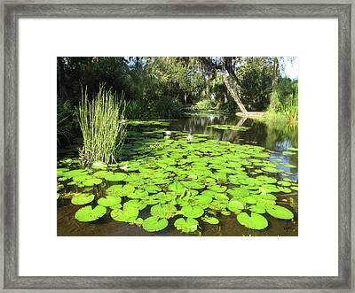 Lilies Of Bok Gardens Framed Print
