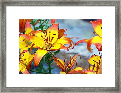 Lilies Of The Field #1 Framed Print