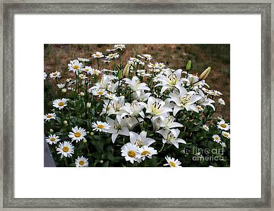 Lilies With Daisies Framed Print