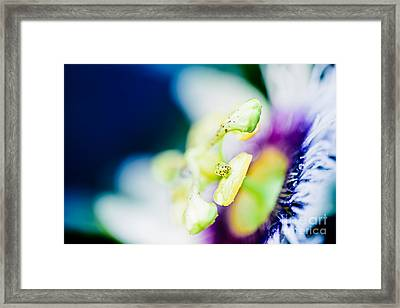 Lilikoi Passion Flower In Colourful Jewel Tones Framed Print