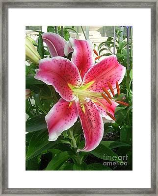 Lilirosa Framed Print
