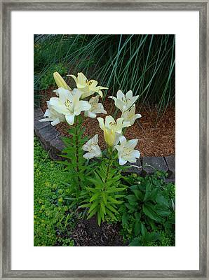 Framed Print featuring the photograph Lillies by Ferrel Cordle