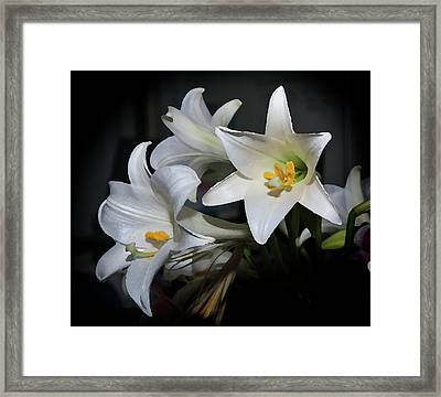 Lillies Framed Print by Odille Esmonde-Morgan