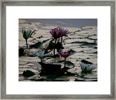 Lillies On The Lake Framed Print by Kimberly Camacho