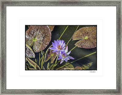 Framed Print featuring the photograph Lillies by R Thomas Berner