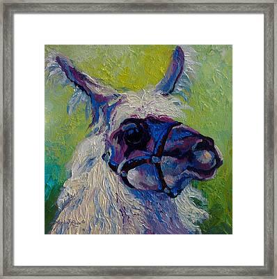Lilloet - Llama Framed Print by Marion Rose