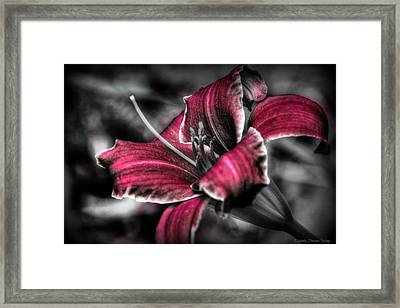 Lilly 3 Framed Print