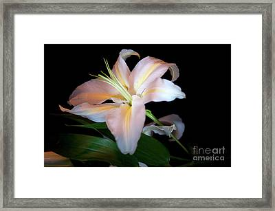 Lilly Framed Print by David  Hollingworth