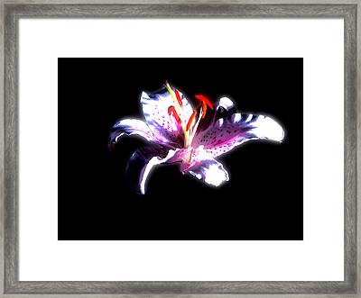Lilly Flower  Framed Print