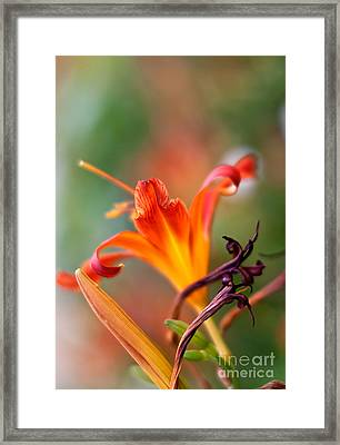 Lilly Flowers Framed Print by Nailia Schwarz