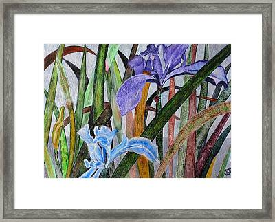 Lilly Framed Print by John Vandebrooke