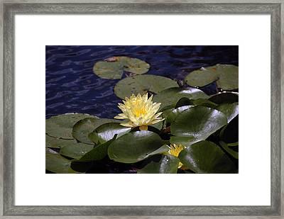 Lilly Framed Print by Kelvin Booker