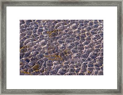 Lilly Lake Framed Print by Mark Ivins
