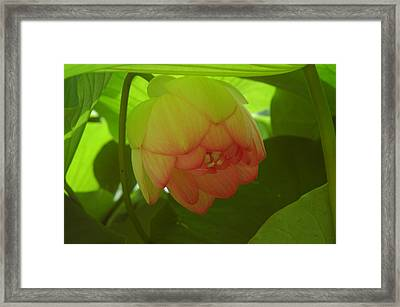 Framed Print featuring the photograph Lilly Light by Kicking Bear  Productions
