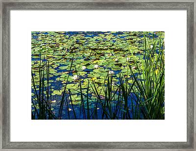 Lilly Pad Pond Framed Print