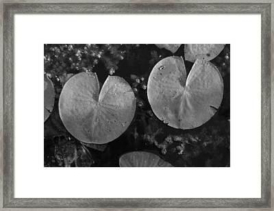 Lilly Pad Symmetry  Framed Print by Trish Hale