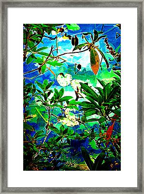 Lilly Pods Framed Print by Dale Stillman