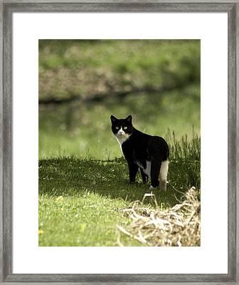 Lilly Framed Print by Trish Tritz