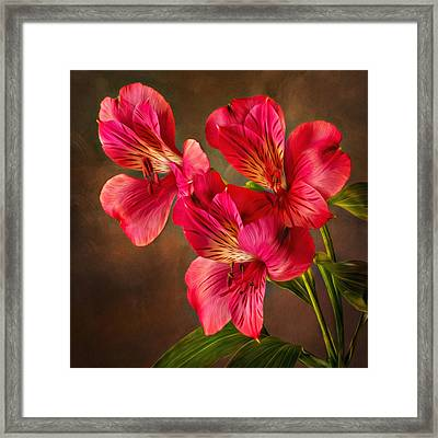 Lilly With Brushstrokes Framed Print by Mary Jo Allen