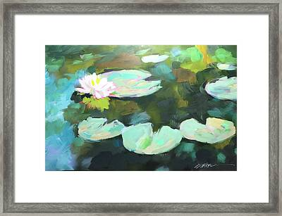 Lillypad Reflections Framed Print
