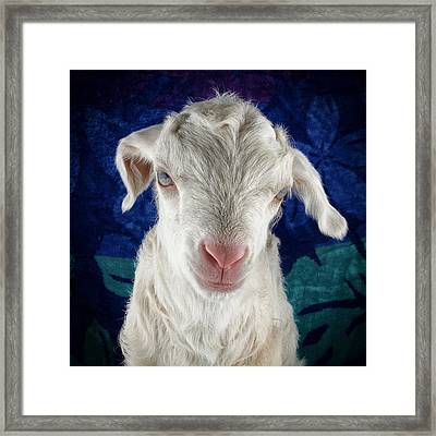 Lilo Is Not Impressed. Framed Print