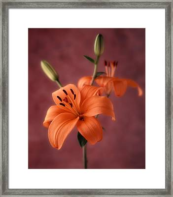 Lily 1 Framed Print by Joseph Gerges