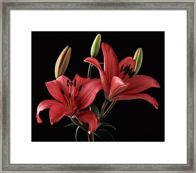 Lily 9 Framed Print by Joseph Gerges