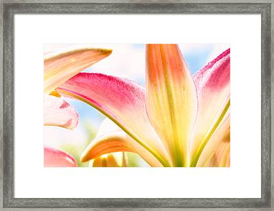 Lily And Clouds Framed Print