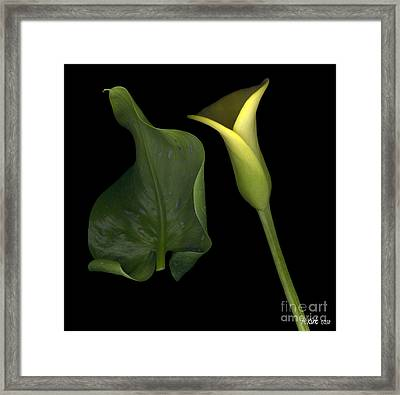 Lily And Leaf Number Two Framed Print by Heather Kirk