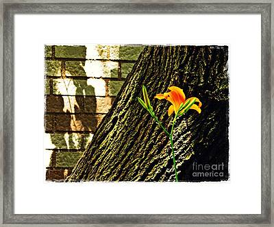 Lily And Shadow Framed Print