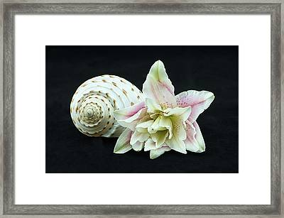 Lily And Shell Framed Print