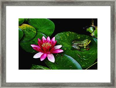 Lily And The Frog Framed Print by Debbie Oppermann