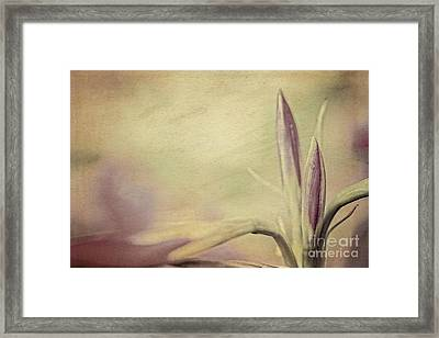 Lily Art Framed Print