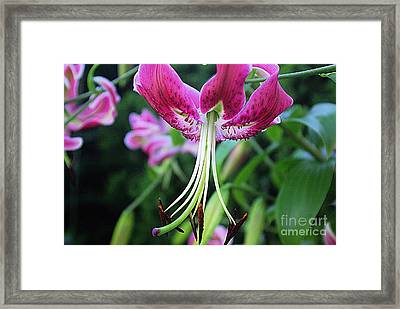 Lily At The Church Framed Print