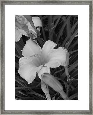 Lily Framed Print by Audrey Venute