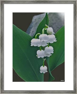 Lily Bells Framed Print by Debra     Vatalaro