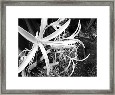 Lily- Black And White  Framed Print