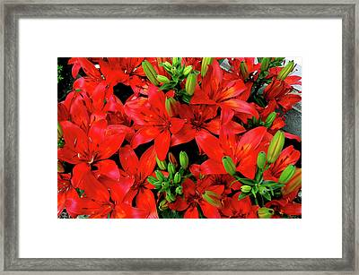Framed Print featuring the photograph Lily Blossoms by LeeAnn McLaneGoetz McLaneGoetzStudioLLCcom