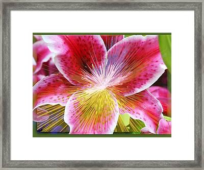 Lily Burst Framed Print by Cathie Tyler