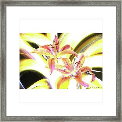 Lily Burst #flower #notphotoshop Framed Print