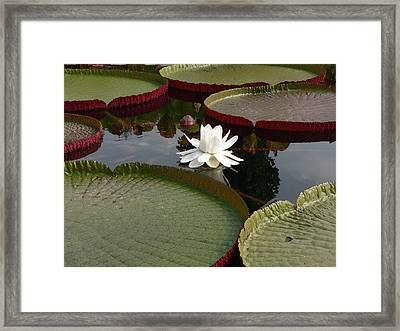 Lily Framed Print by David Bearden