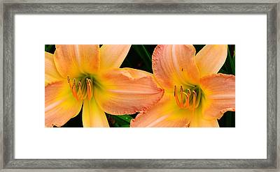 Lily Duo Framed Print