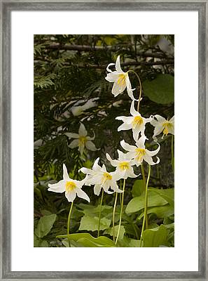 Framed Print featuring the photograph Lily Fantasy by Judy Deist