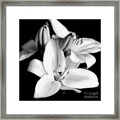 Lily Flower In Black And White Framed Print by Kimxa Stark